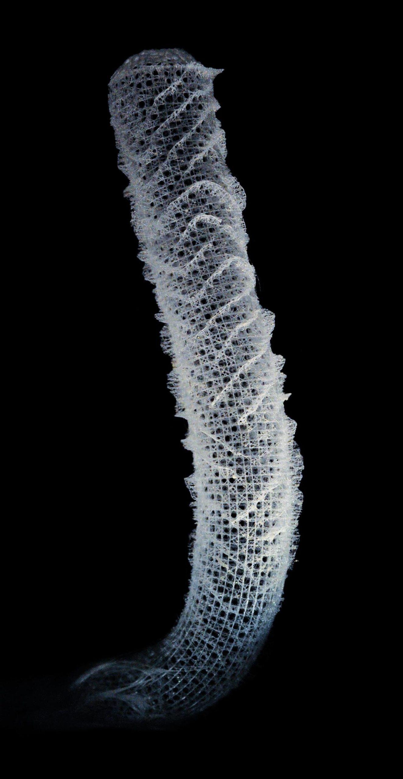 Marine sponges inspire the next generation of skyscrapers and bridges – Phys.org